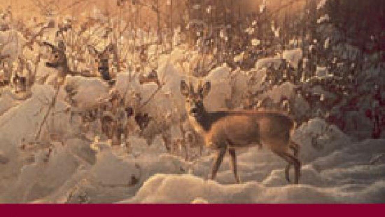 Weihnachtsgrüße Jagdlich.Wild Weihnachtskarten Wild Und Hund