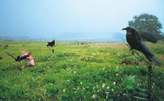 Mit Fuchs und Flatter-Krähe - WILD UND HUND