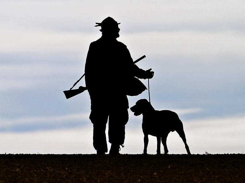 Die dämmerungsspezialisten wild und hund