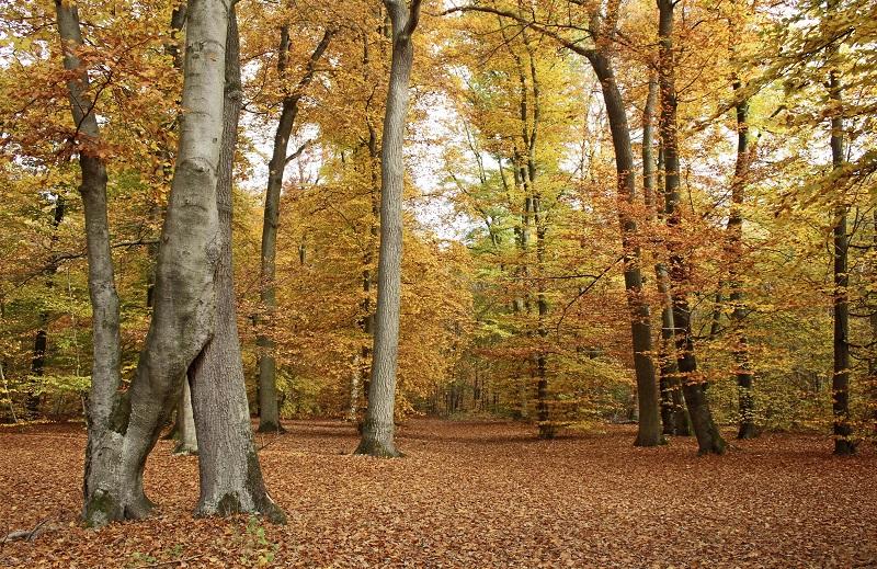 Bunte Blatter Natur Im Herbst Wild Und Hund