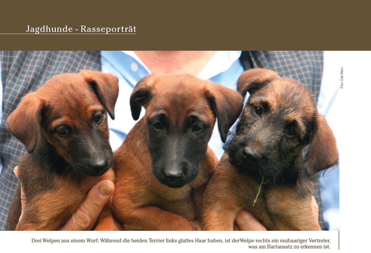 Atemberaubend Haar Terrier Mix Rasse Zeitgenössisch - Der Schaltplan ...
