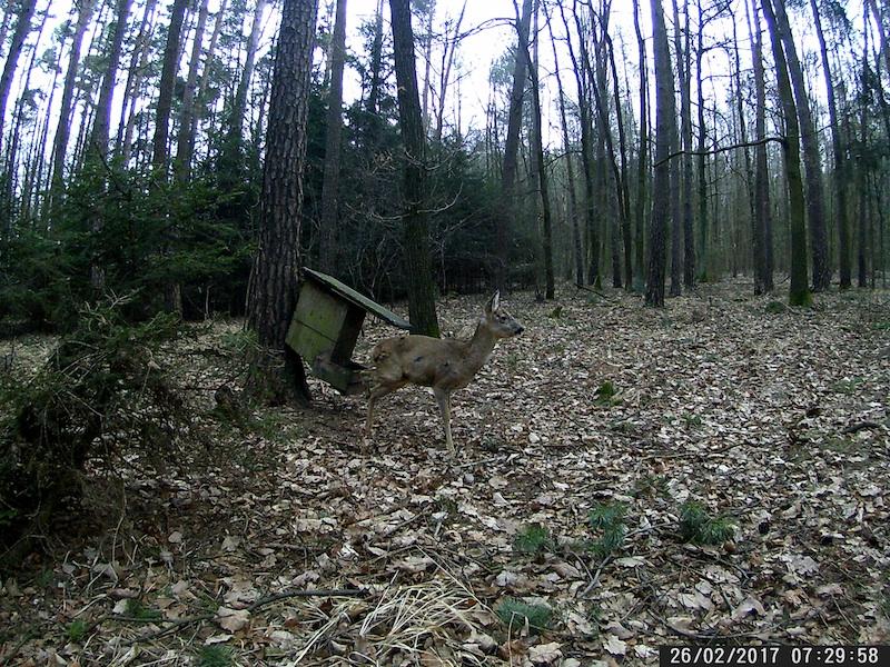 Jagdscheinentzug