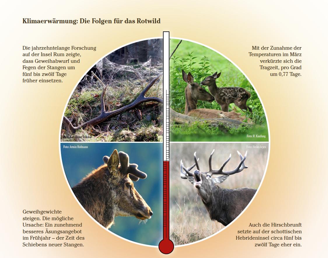 Klimawandel und Wild
