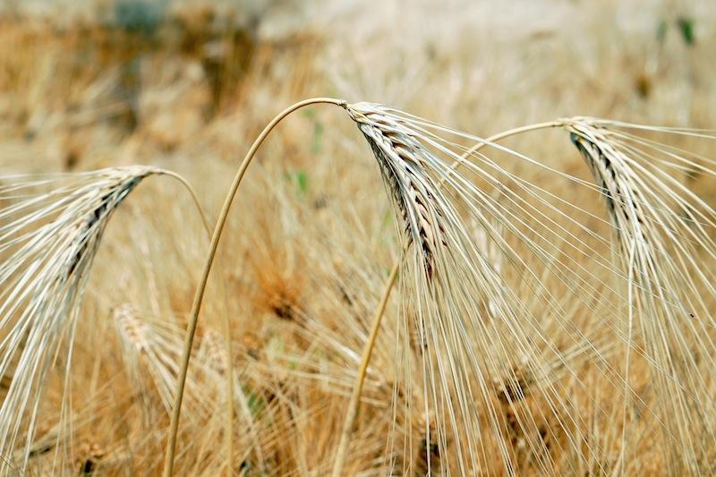 Feldfrüchte