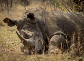 Wilderei und illegaler Wildtierhandel wird in Zukunft sträker bekämpft.