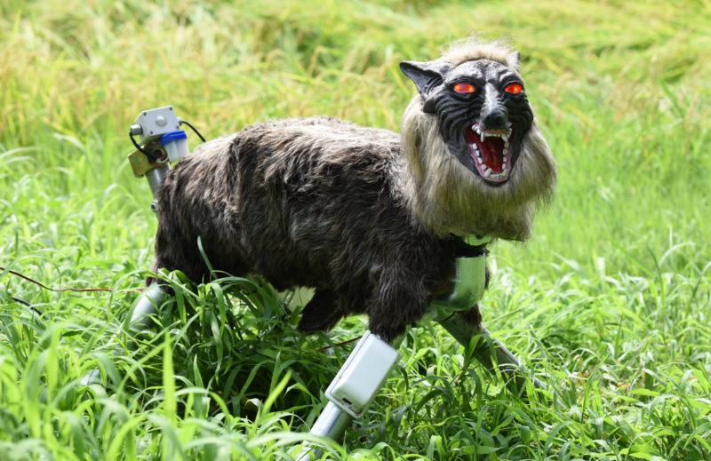 Der Super-Monster-Wolf soll künftig die Reisfelder vor WIldschäden schützen.