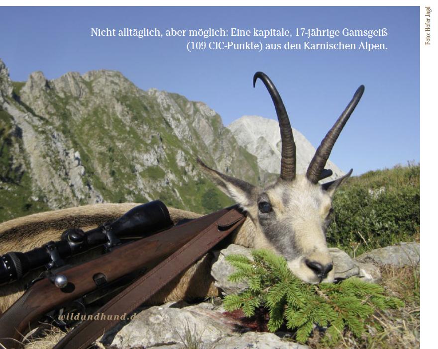 Alp Jagd Entfernungsmesser : Gamsjagd in europa wild und hund
