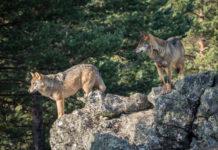 Warnung vor Spaltunf des Jagdrechts