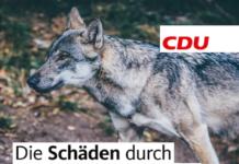 Wolf ist Wahlkampfthema