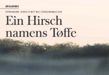 Hirsche