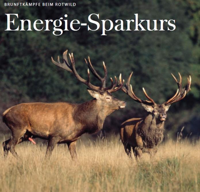 Energie-Sparkurs