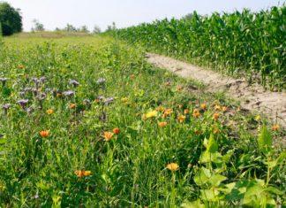 Presi für wildierfreundliche Landwirtschaft