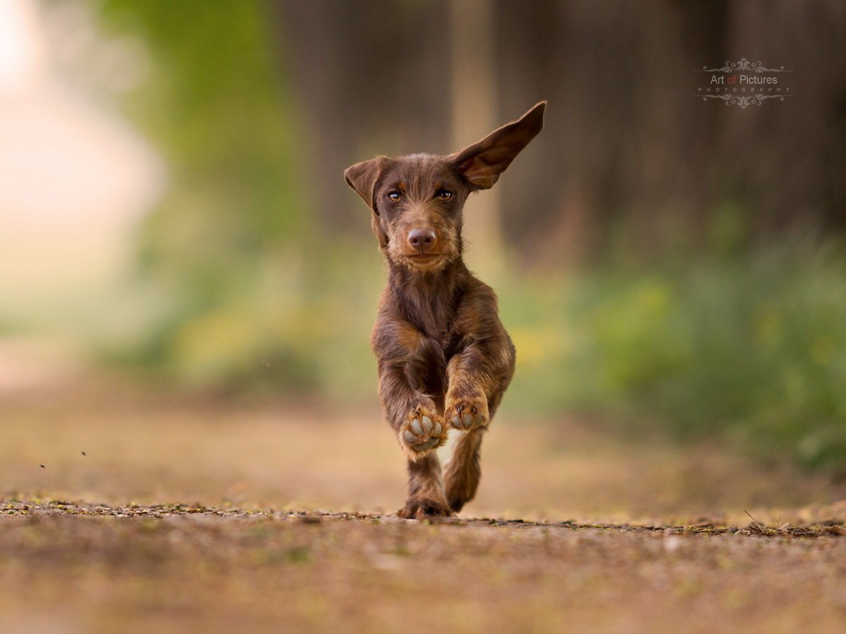 Wildundhund.de gewinnspiel bockjagdrätsel