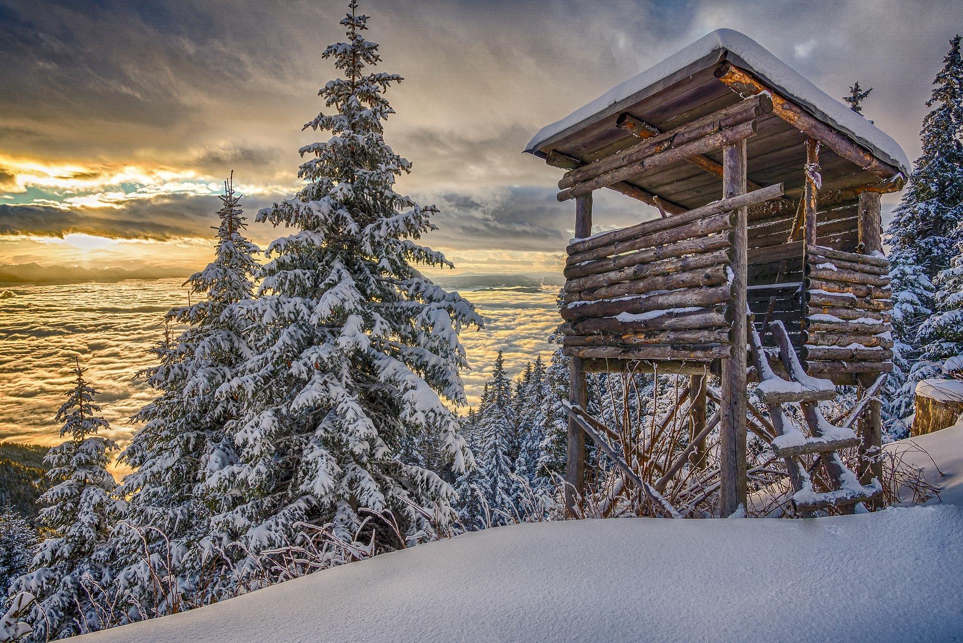 Österreich: Forstwarte als Berufsjäger