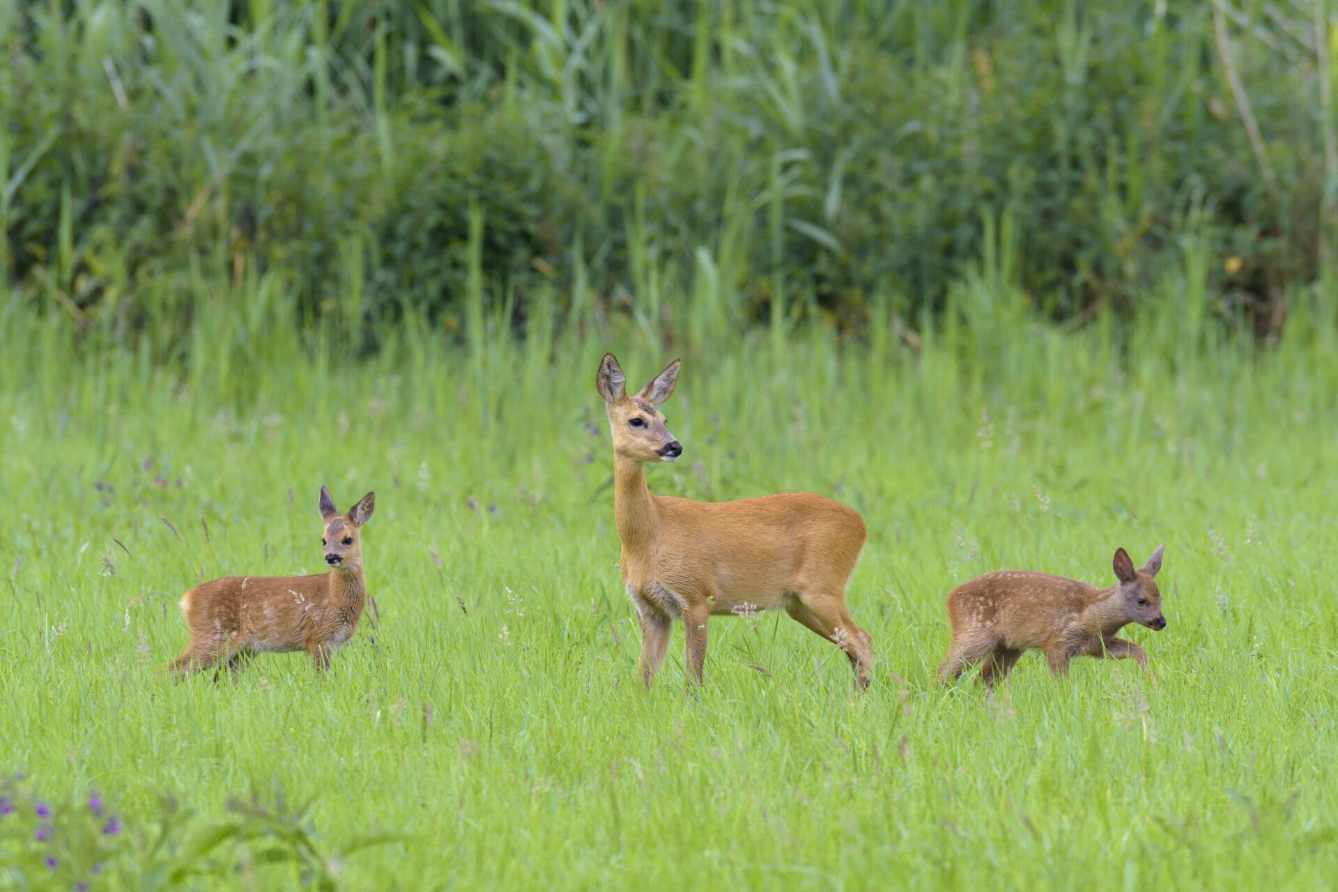 Nordrhein-Westfalen: Wilderei im Grenzgebiet - WILD UND HUND
