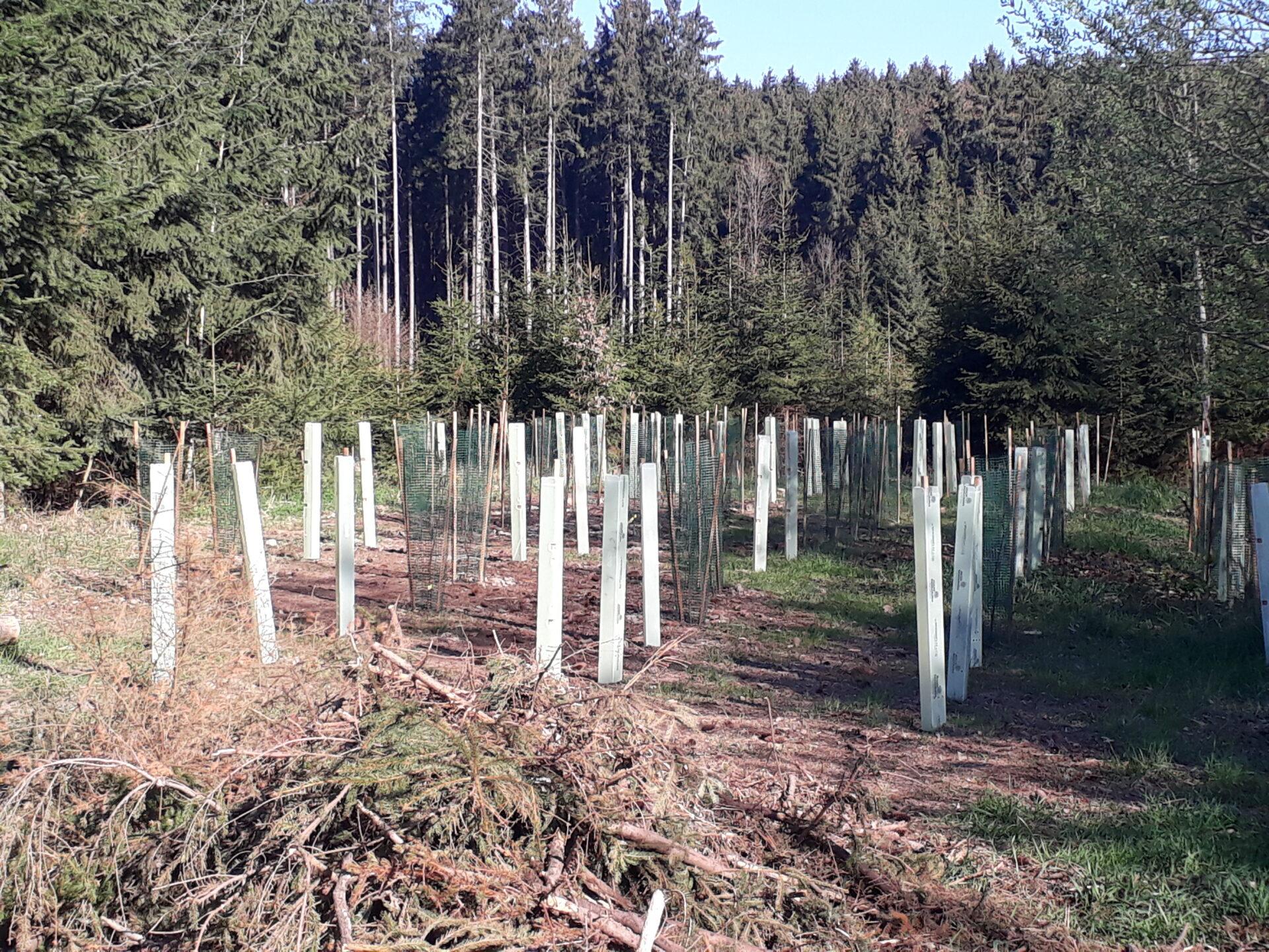 """Bayern: Staatswald soll """"Klimawald"""" werden - WILD UND HUND"""