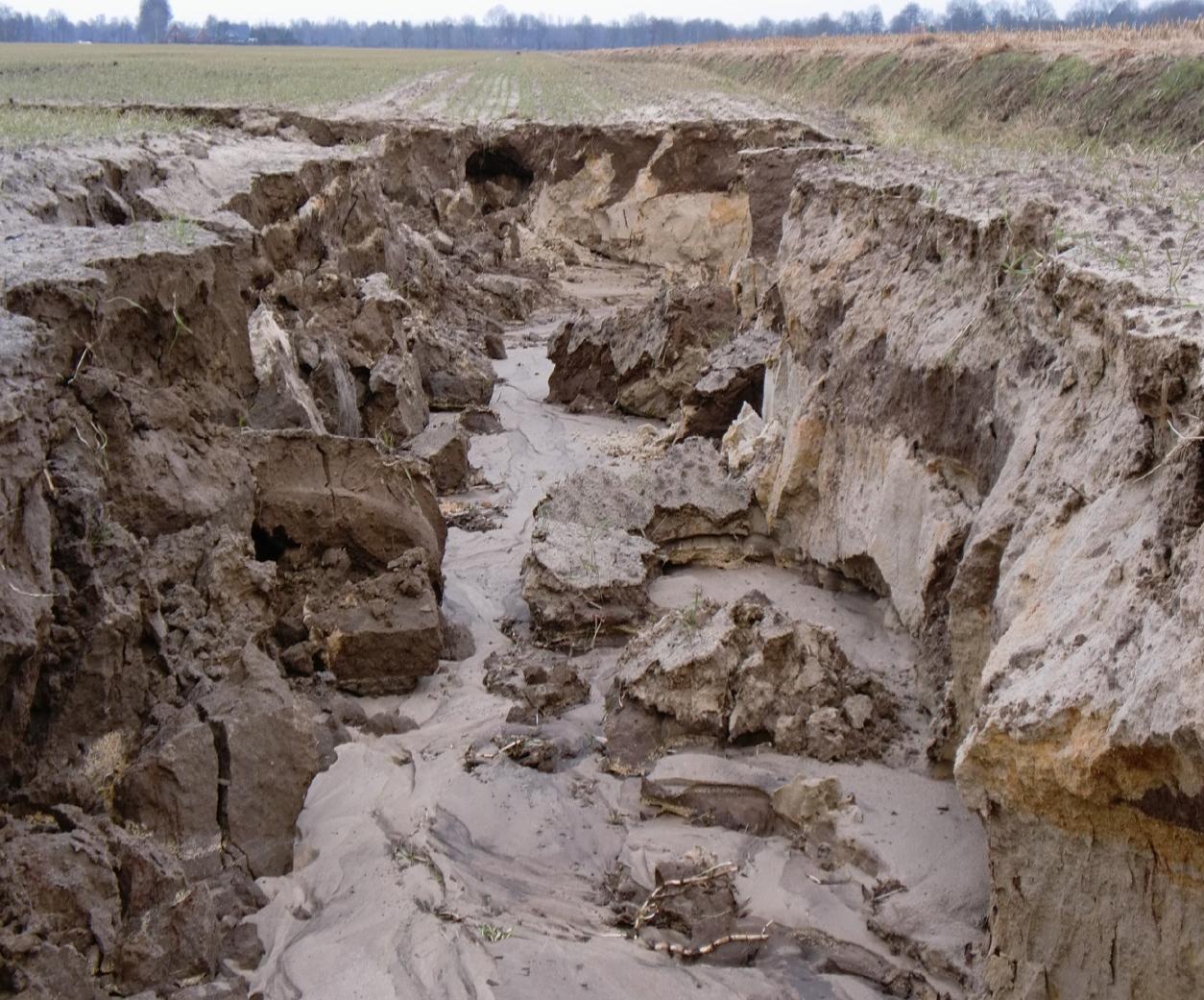 Bremen: NABU sorgt sich um Nutrias - WILD UND HUND