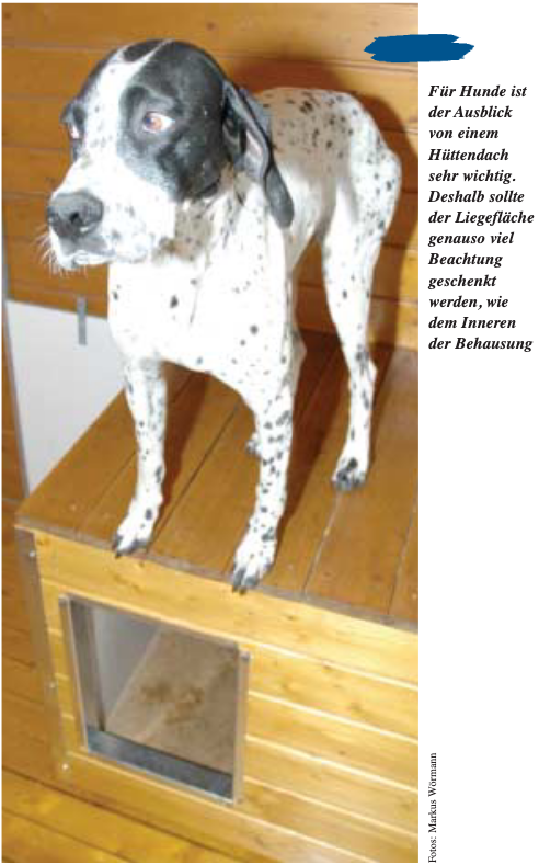 Hund Phylax