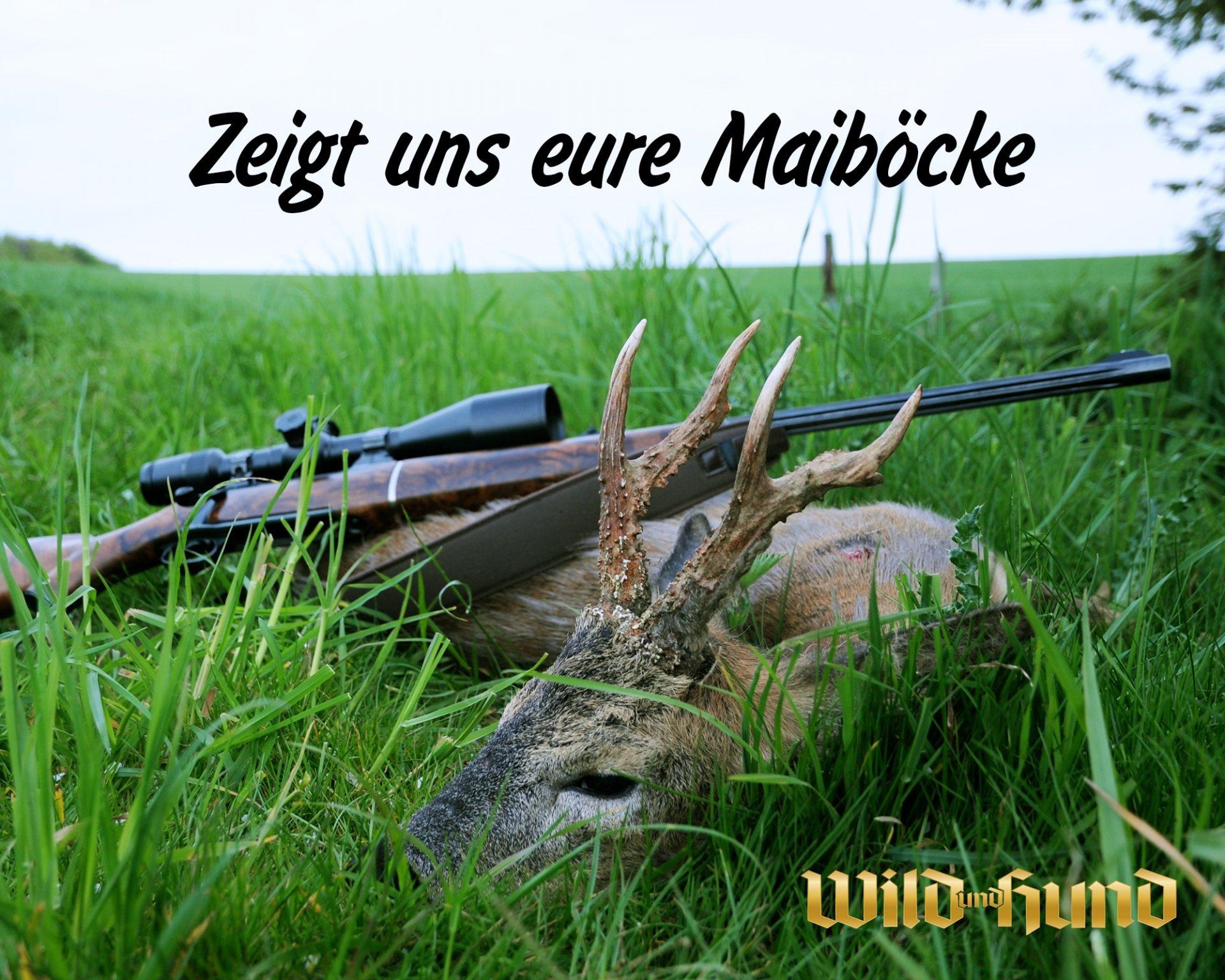 wuh-bockjagd  2021 - wild und hund
