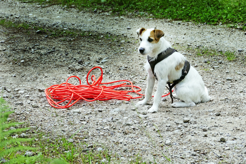 Hund Otto