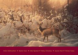 wild weihnachtskarten wild und hund