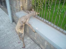 Hetze endete im gartenzaun wild und hund - Gartenzaun fur hunde ...