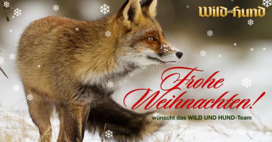 Weihnachtsgrüße Jagdlich.Festtagssmenü Wild Und Hund