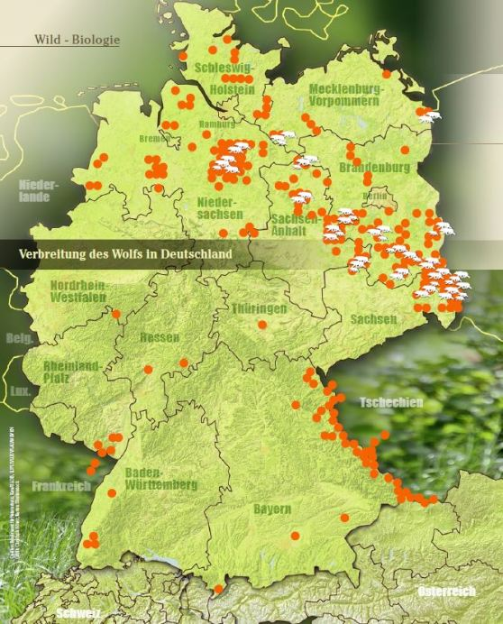 Wölfe In Brandenburg Karte.Der Wolf Wild Und Hund